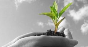 crecimiento excelencia